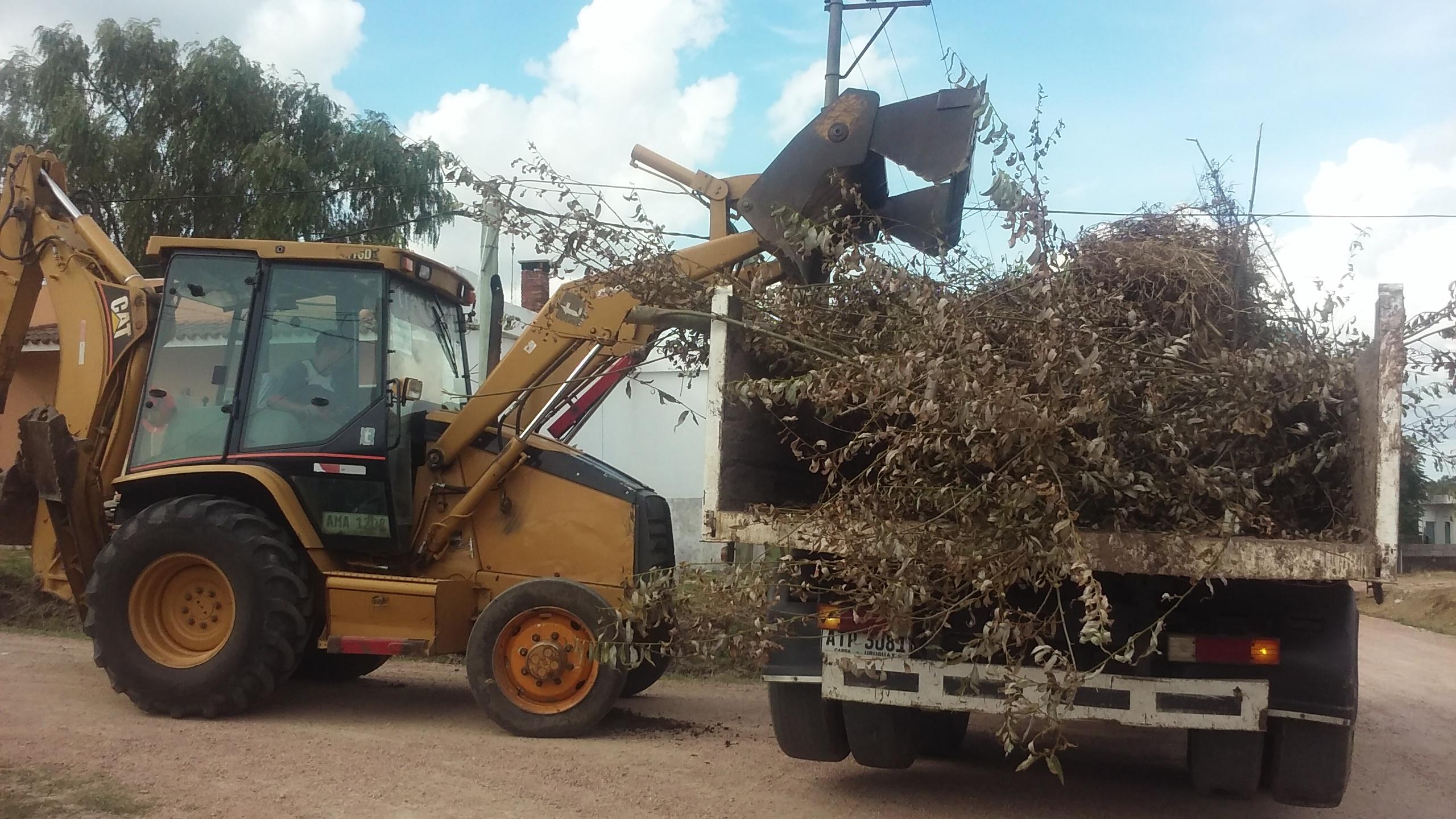 Servicio municipal gratuito de retiro de restos vegetales
